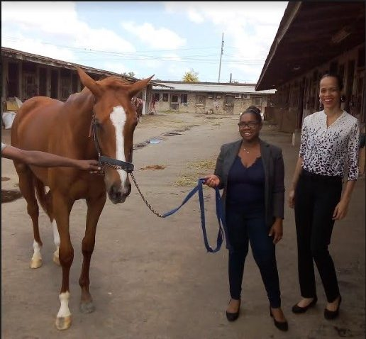 CARIBBEAN AIRLINES CARGO TRANSPORTS HORSES