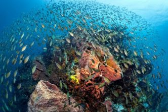 Anse Chastanet Announces Underwater Photography Training