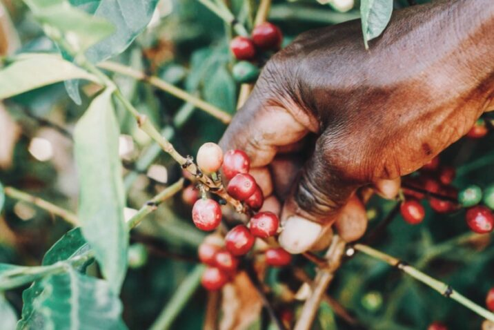 Coffee Roasters Of Jamaica Expands To The International Market2